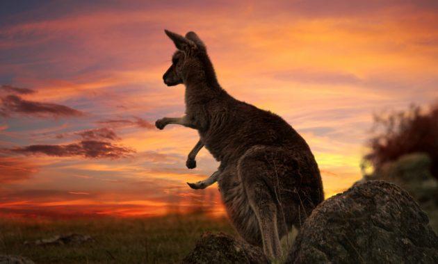 Der ultimative Australien-Reiseführer
