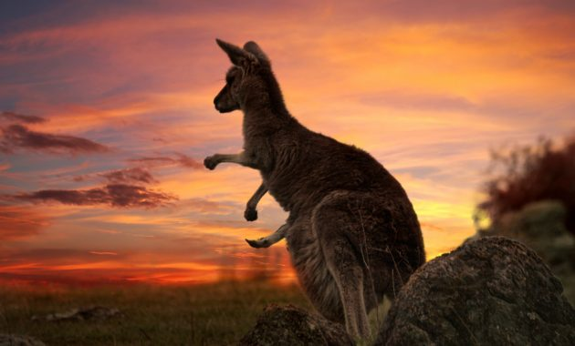 L'ultima guida turistica in Australia