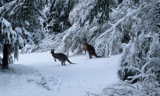 Talvi Australiassa: mitä odottaa